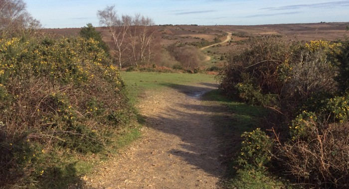 Recommended New Forest walk